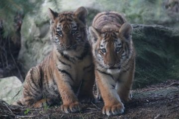 Dublin Zoo Half Price Tickets